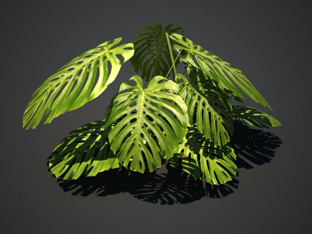 3d tropical plant model
