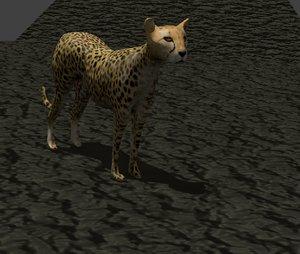 cheetah cat feline 3d model