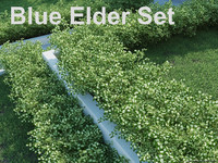 blue elder shrub set 3d 3ds