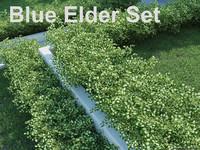 blue elder shrub set 3d 3ds