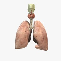lungs anatomy 3d obj