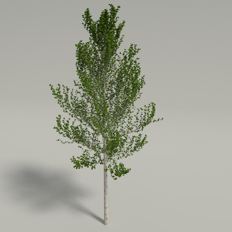 birch blender 3ds
