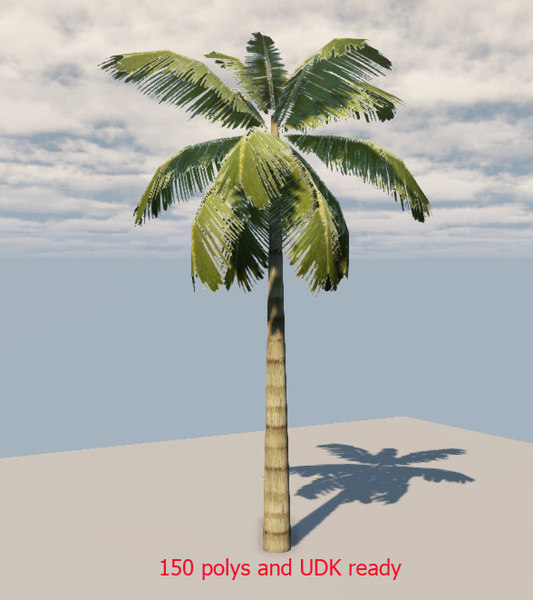 s max palm tree 45