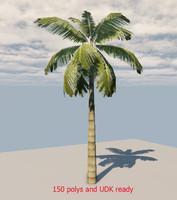palm tree 45