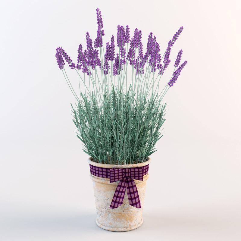 model lavender flowers pot