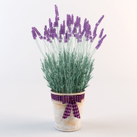 model lavender flowers pot