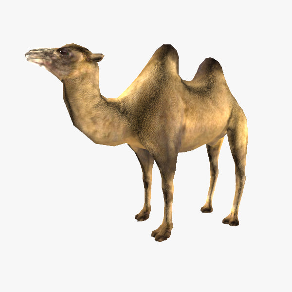 3d obj camel