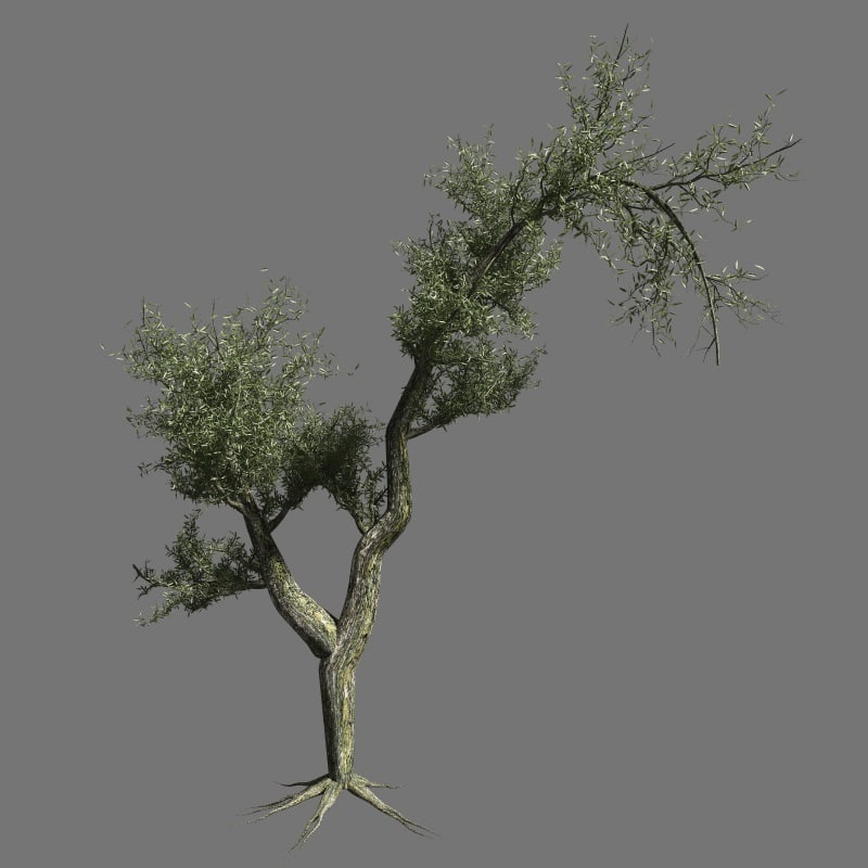 olive tree 3d 3ds