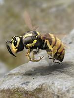 3d model wasp