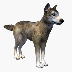 3d model canine dog