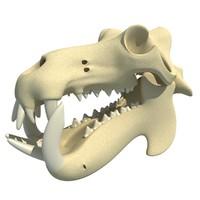 River Horse Hippo Skull