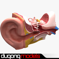 dugm01 ear anatomy 3ds