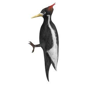 3d woodpecker wood pecker model