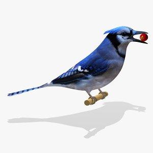 3d blue jay ab model