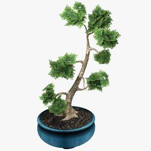 potted bonsai tree 3d model