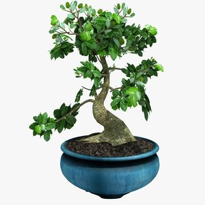 3d potted bonsai tree model