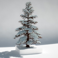 pine tree snow max