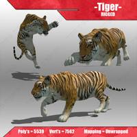 tiger cat feline 3d model