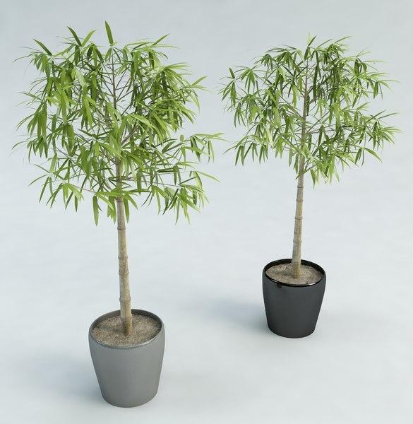 3d model of bamboo tree