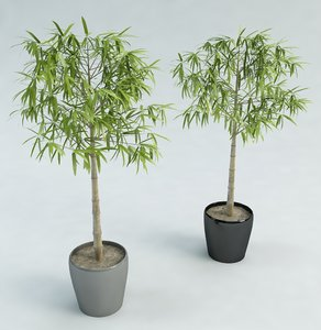 3d model of bamboo tree