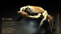 3d crab shell