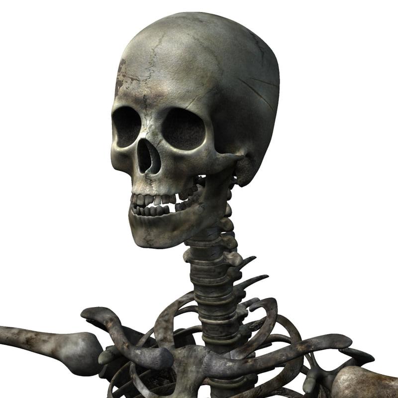 human skeleton ma