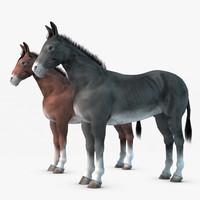 max donkey realistic