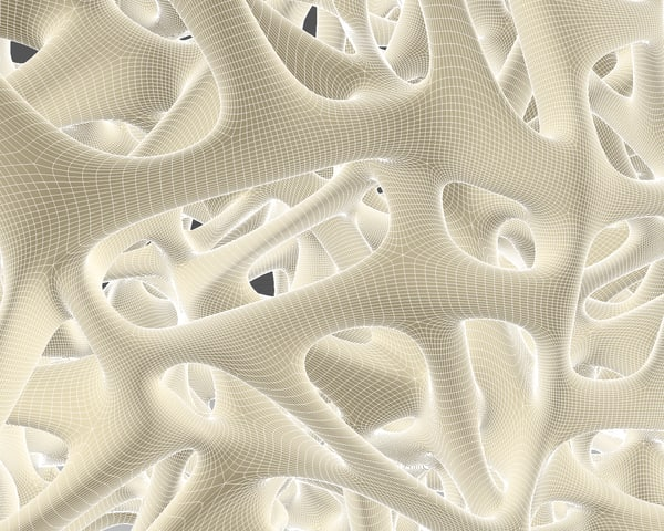 cinema4d bone structure