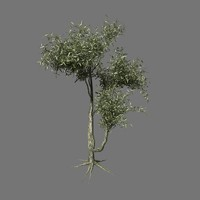hq olive tree 3d 3ds