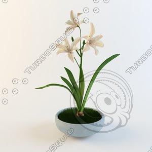 3d model lily flower