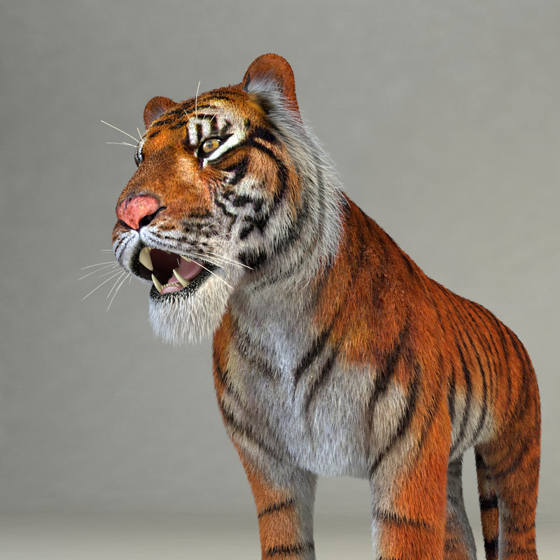 realistical tiger rigged 3d 3ds