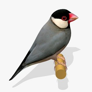java sparrow ab 3ds