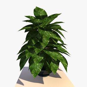 maya pothos house plant