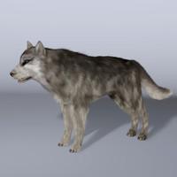 cinema4d hair wolf