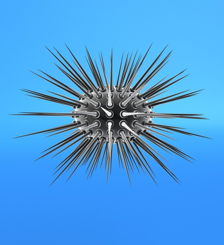 3d model white sea urchin