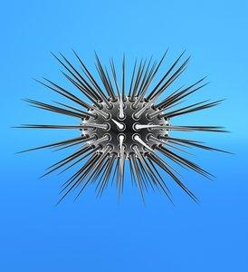 3d model white sea urchin