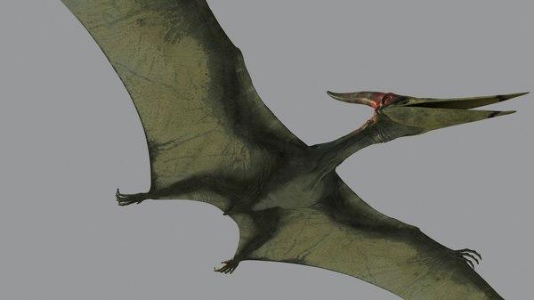 3d pterodon model