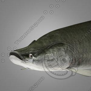 3dsmax arapama fish