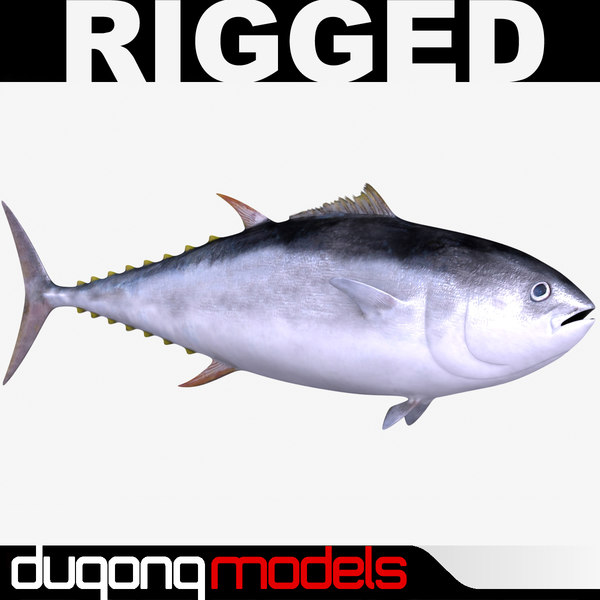dugm02 giant bluefin tuna 3d model