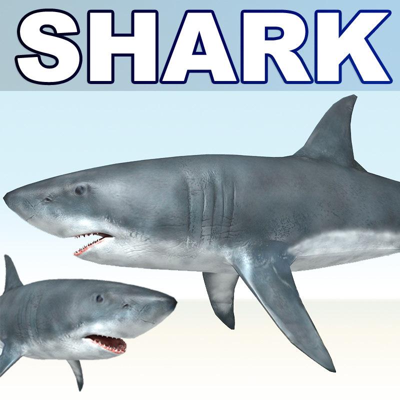white shark 3d obj