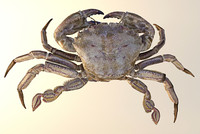 3d max crab