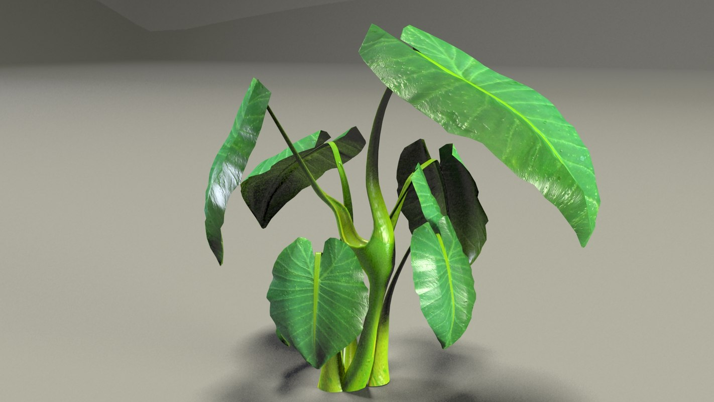 leaf stem 3d model
