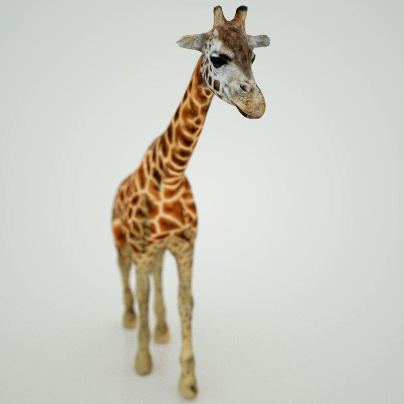 3d model of giraffe