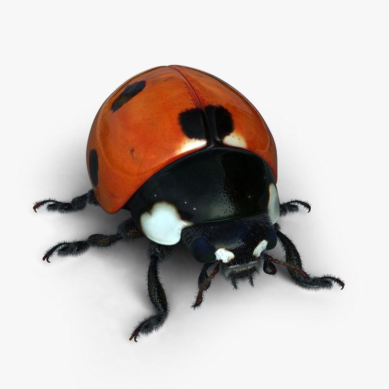 ladybird modelled obj