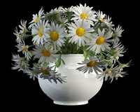 camomile matricaria in vase(1)