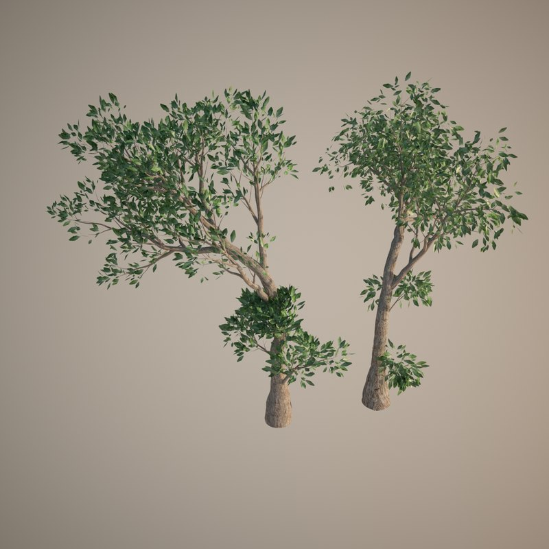 16 bonsai olive trees 3d model