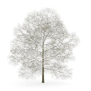 chestnut winter