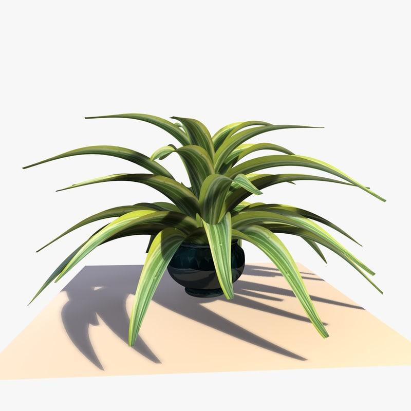 dracaena house plant 3d model