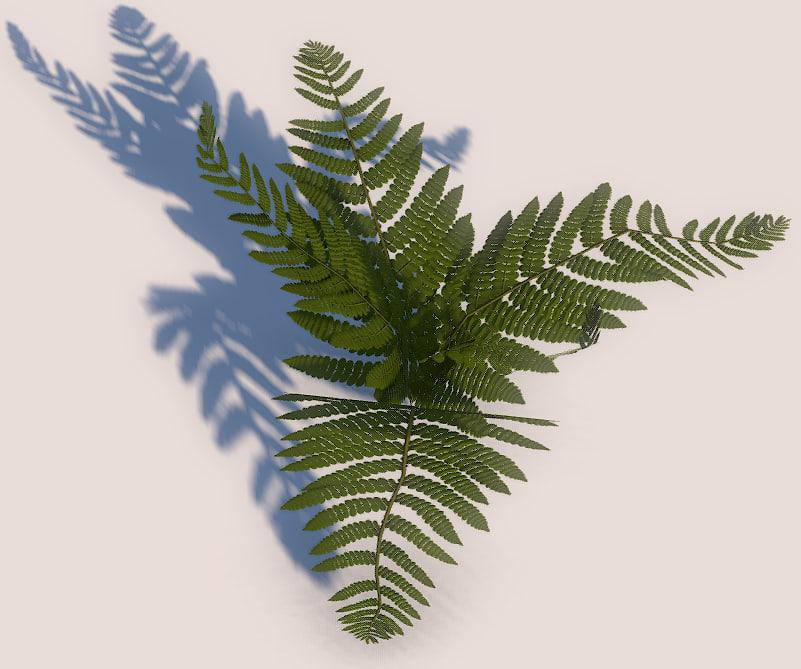 pretty fern 3d model