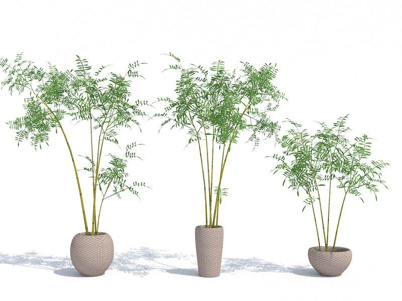 bamboo bushes 3d c4d
